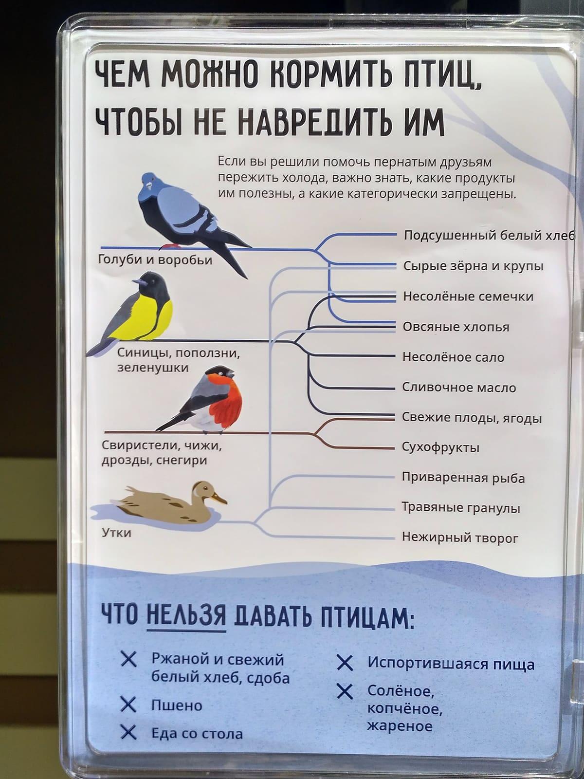 Чем можно и чем нельзя кормить птиц