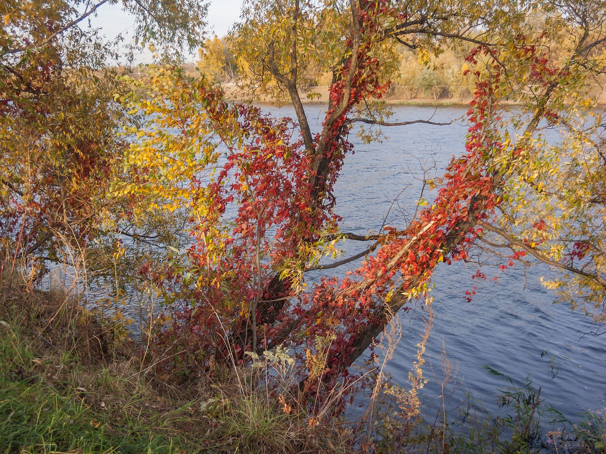 """Дерево в парке """"Братеевская пойма"""""""