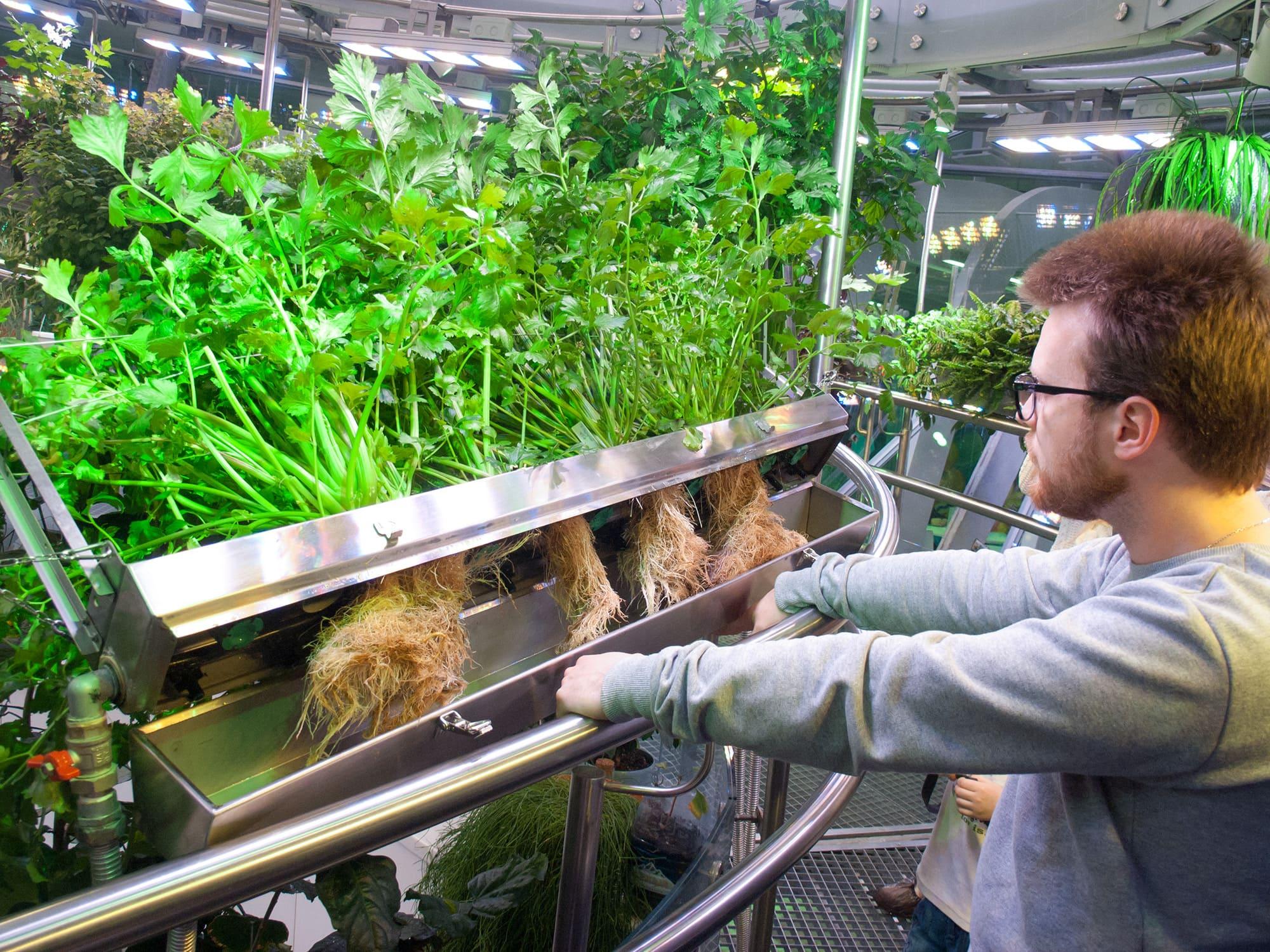 Экскурсовод демонстрирует корни сельдерея, выращенного в аэропонике