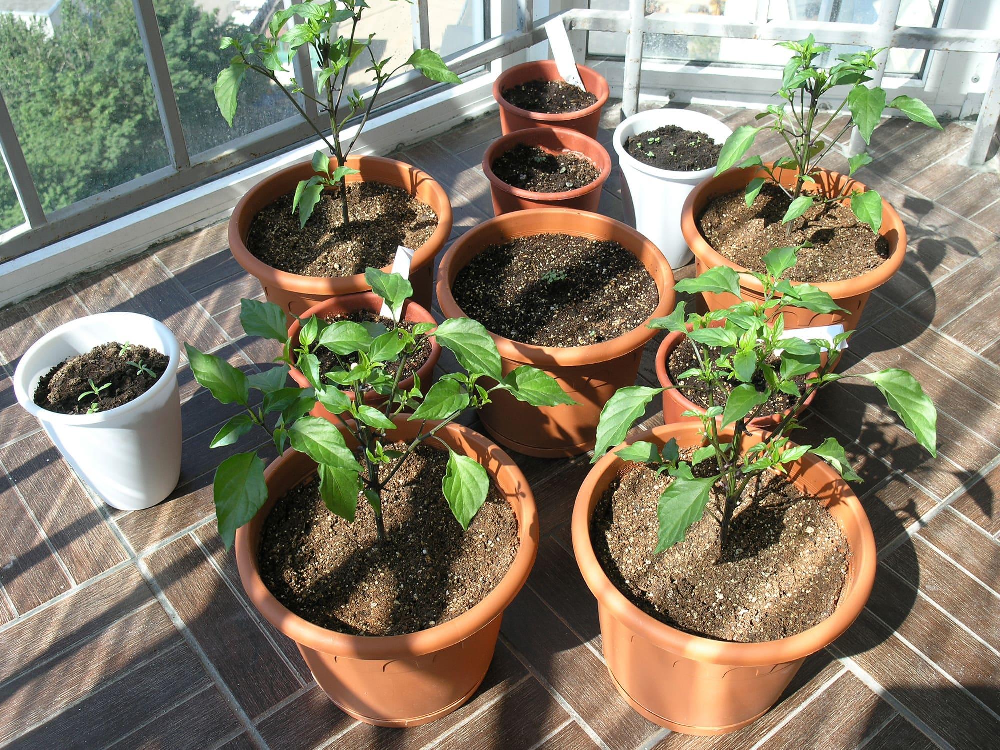 Растения в горшках на балконе