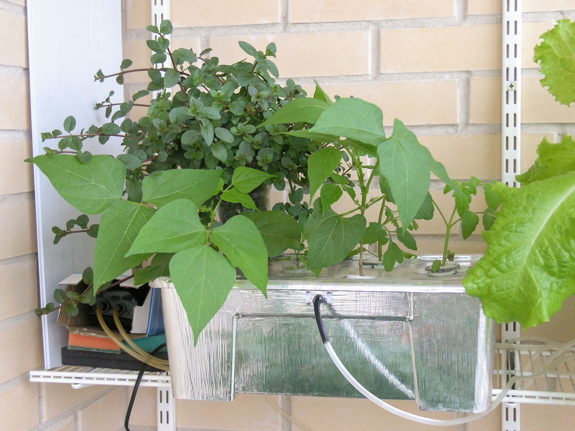 Гидропонный контейнер с растениями