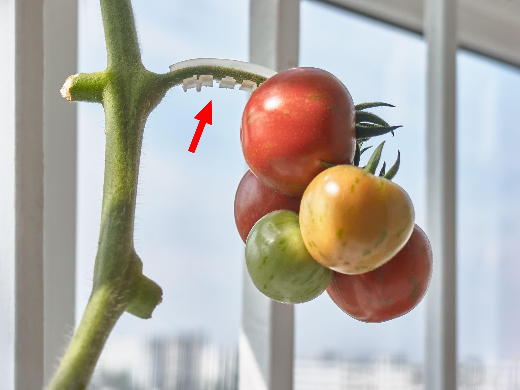 Кистедержатель для помидоров