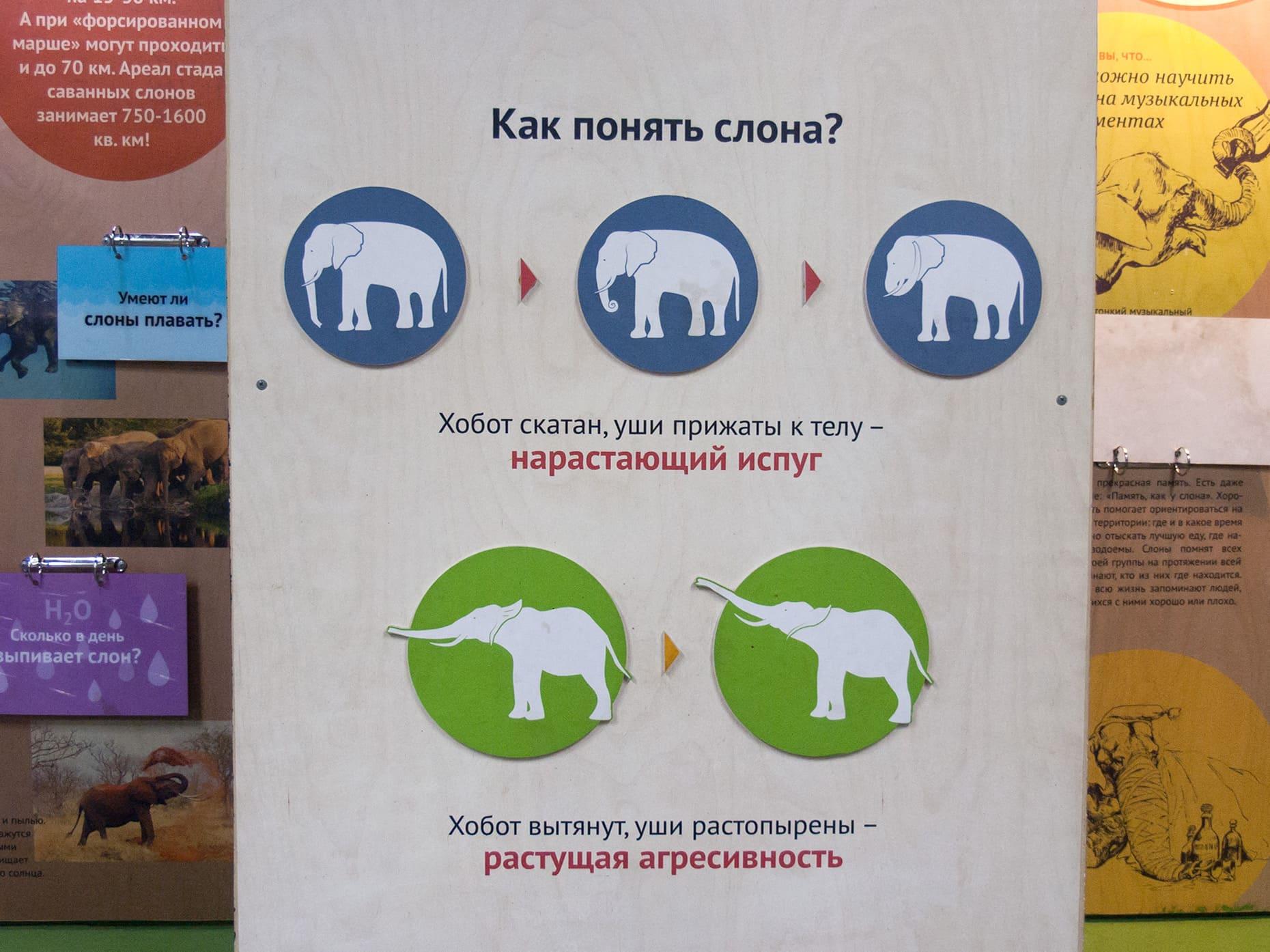 Как понять слона
