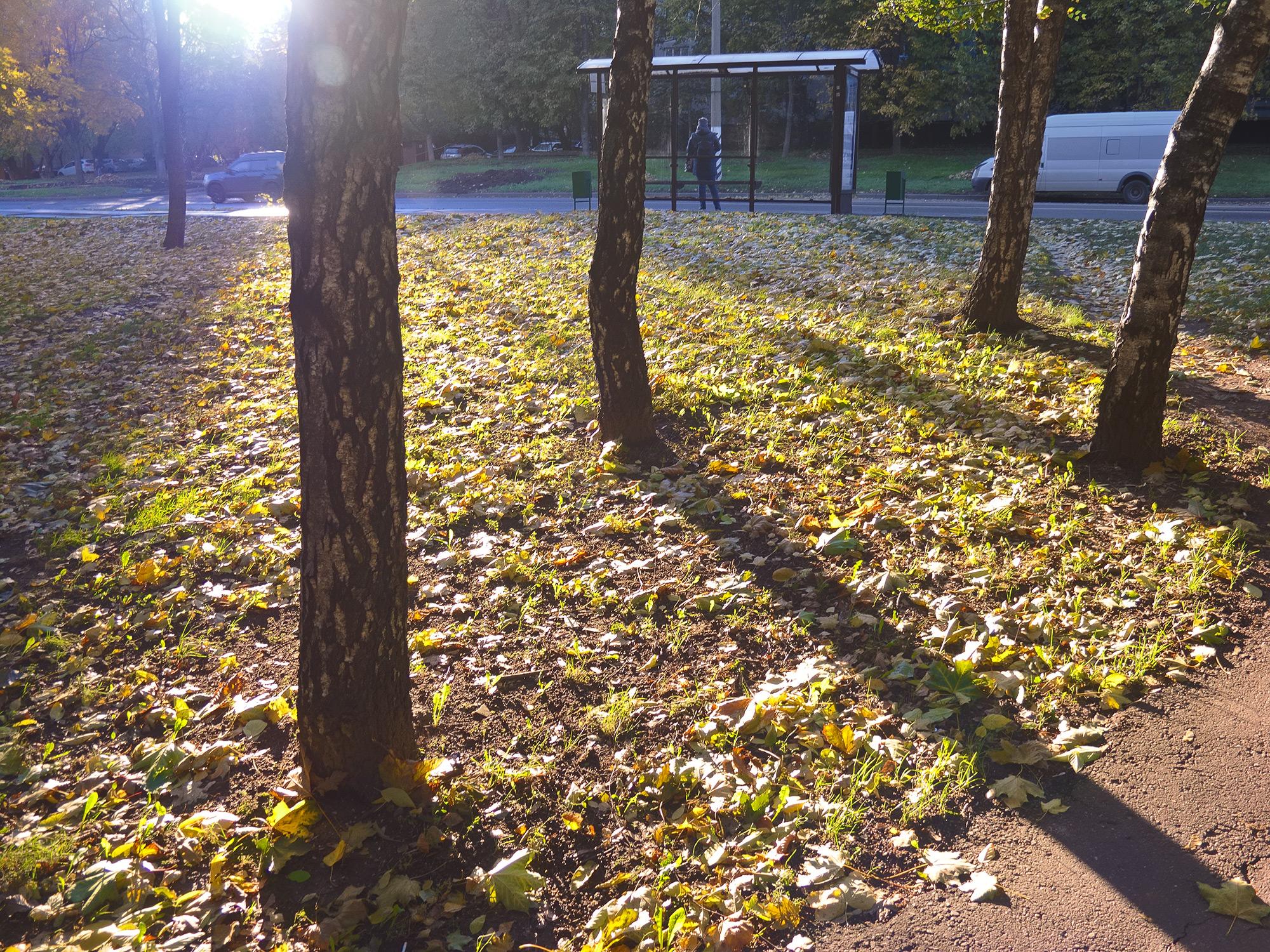 Осень, жёлтые листья, берёзы