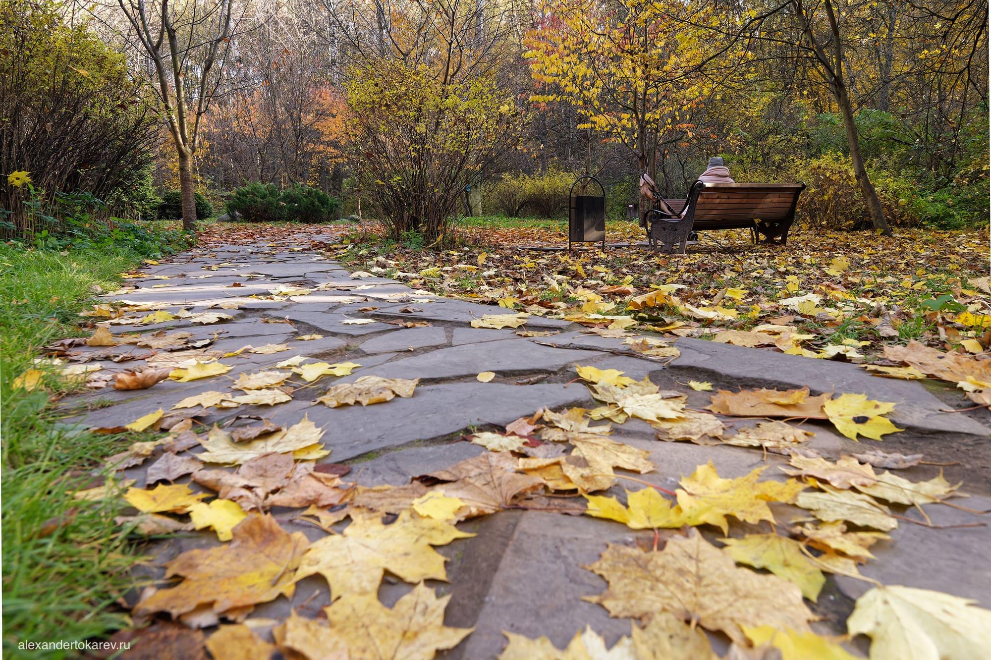 Дорожка в Роще сакуры в Бирюлёвском дендропарке