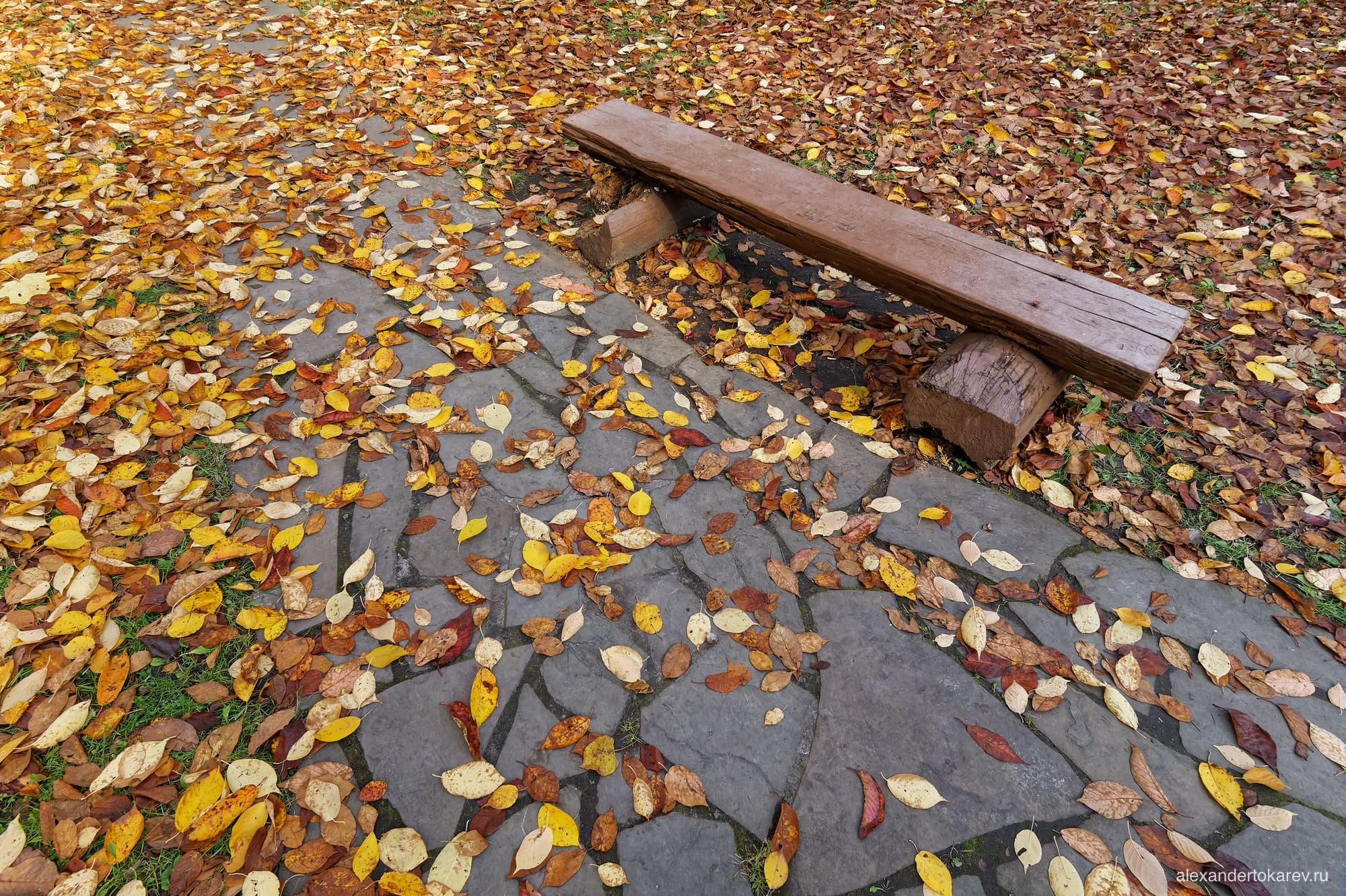Скамейка в Роще сакуры в Бирюлёвском дендропарке