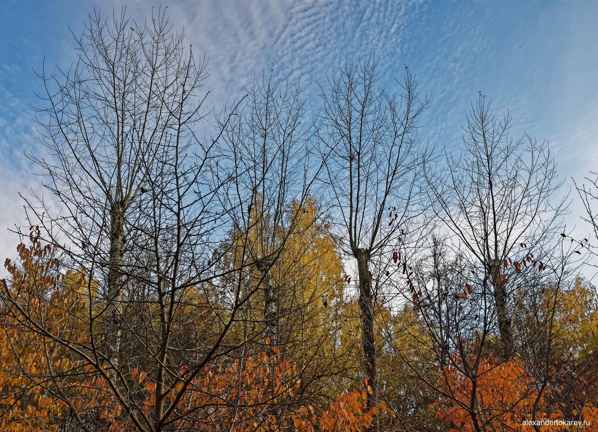 Тополя в Бирюлёвском дендропарке