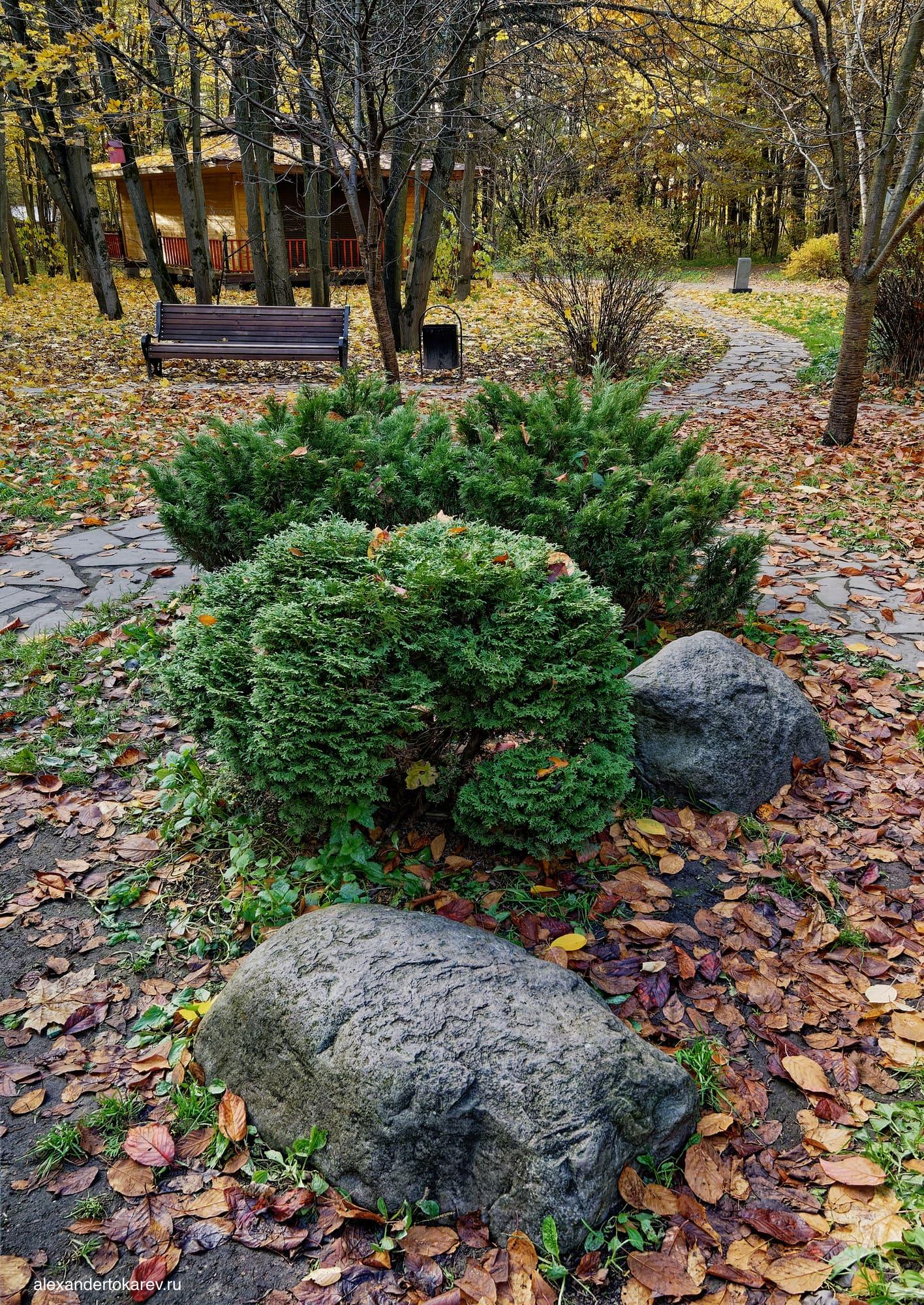 Роща сакуры в Бирюлёвском дендропарке