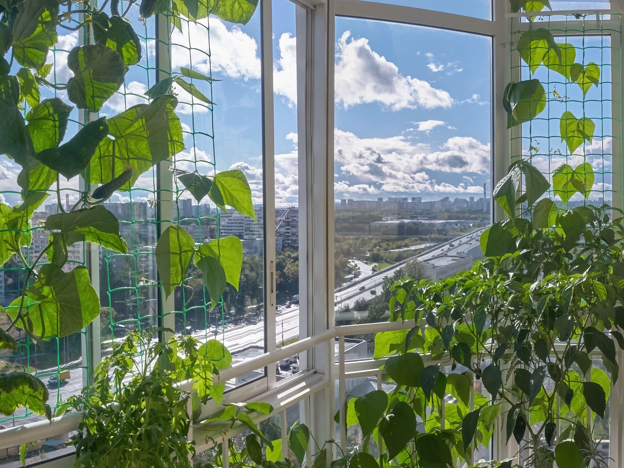 Моя балконно-гидропонная оранжерея (2020)