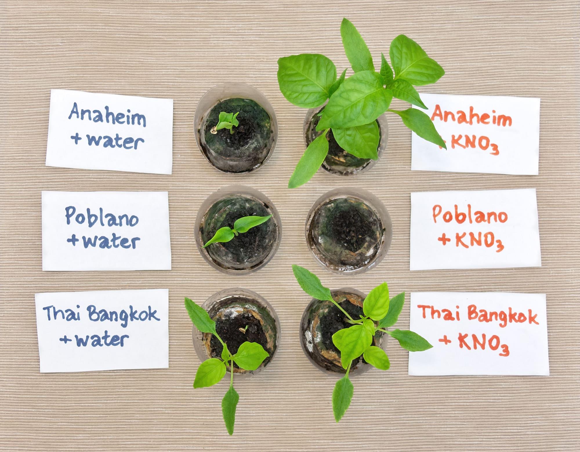 Тест ускорителя прорастания семян