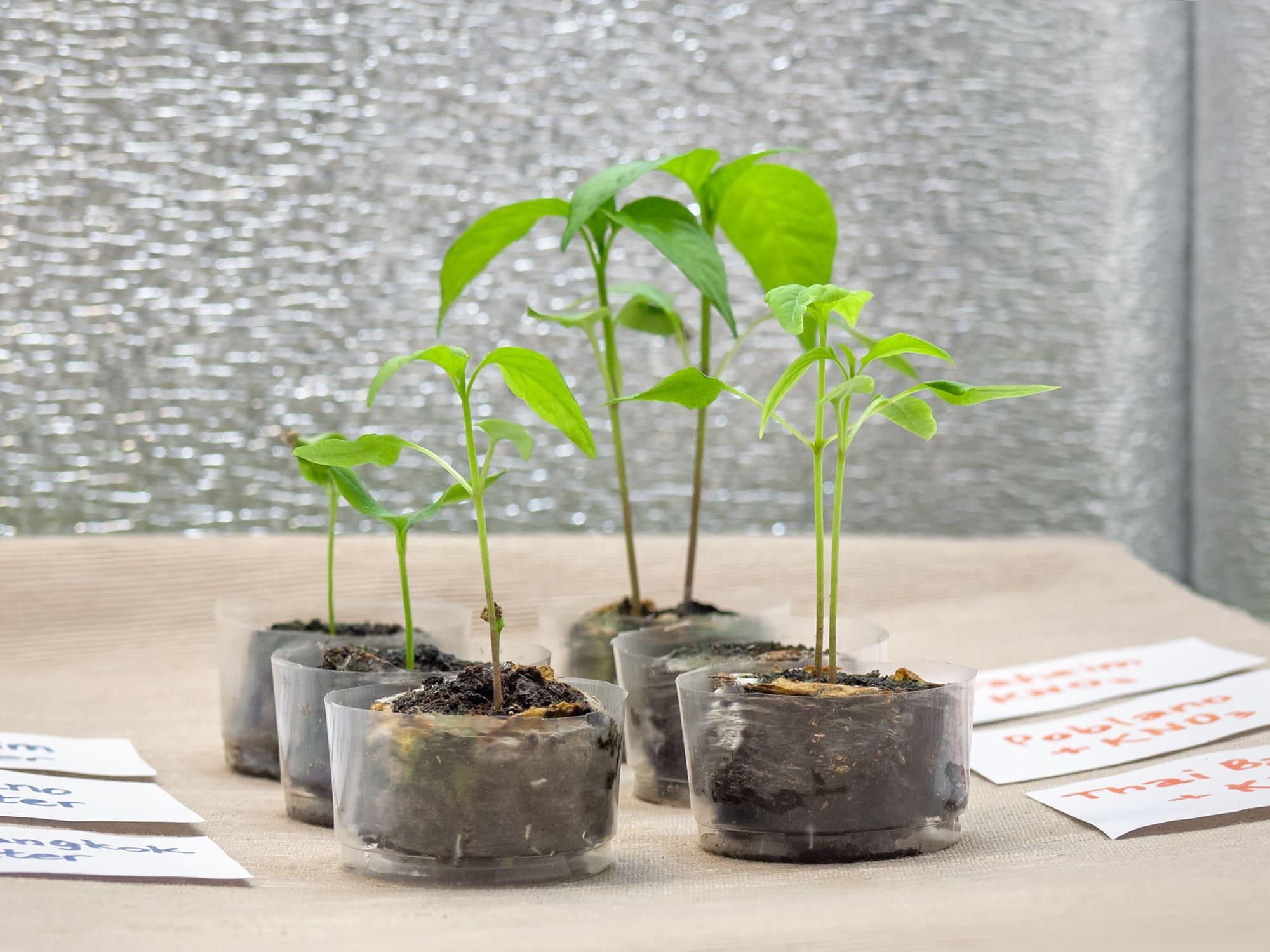 Ускоритель прорастания семян
