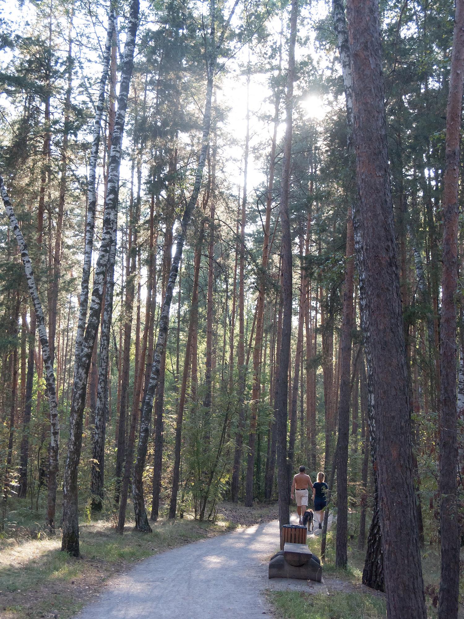 Лес на острове Серебряный Бор
