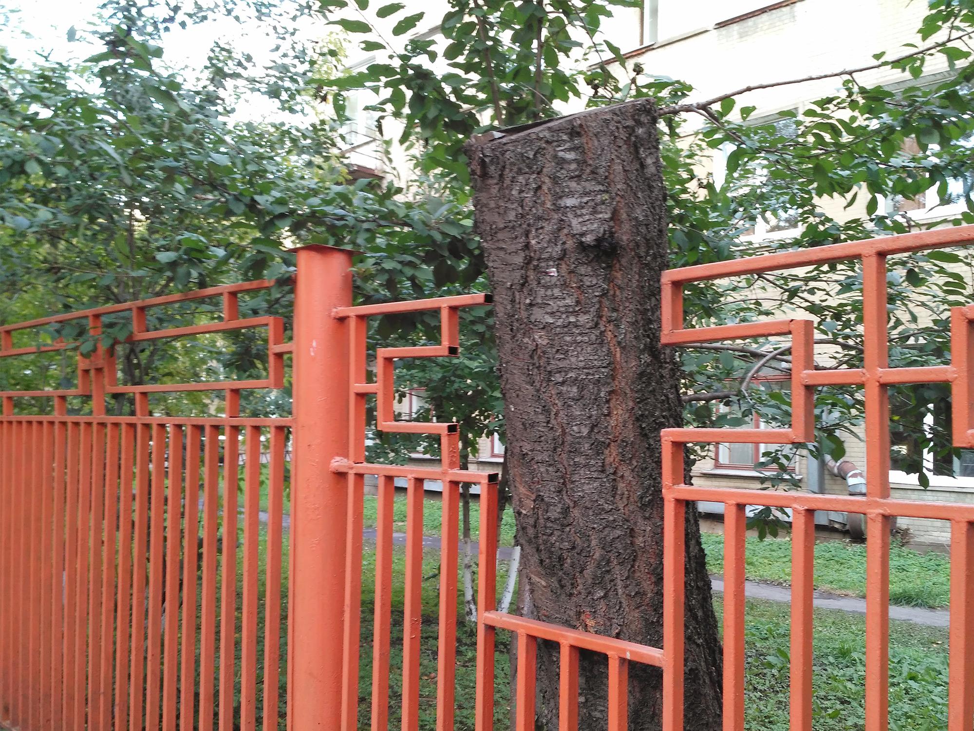 Дерево в заборе