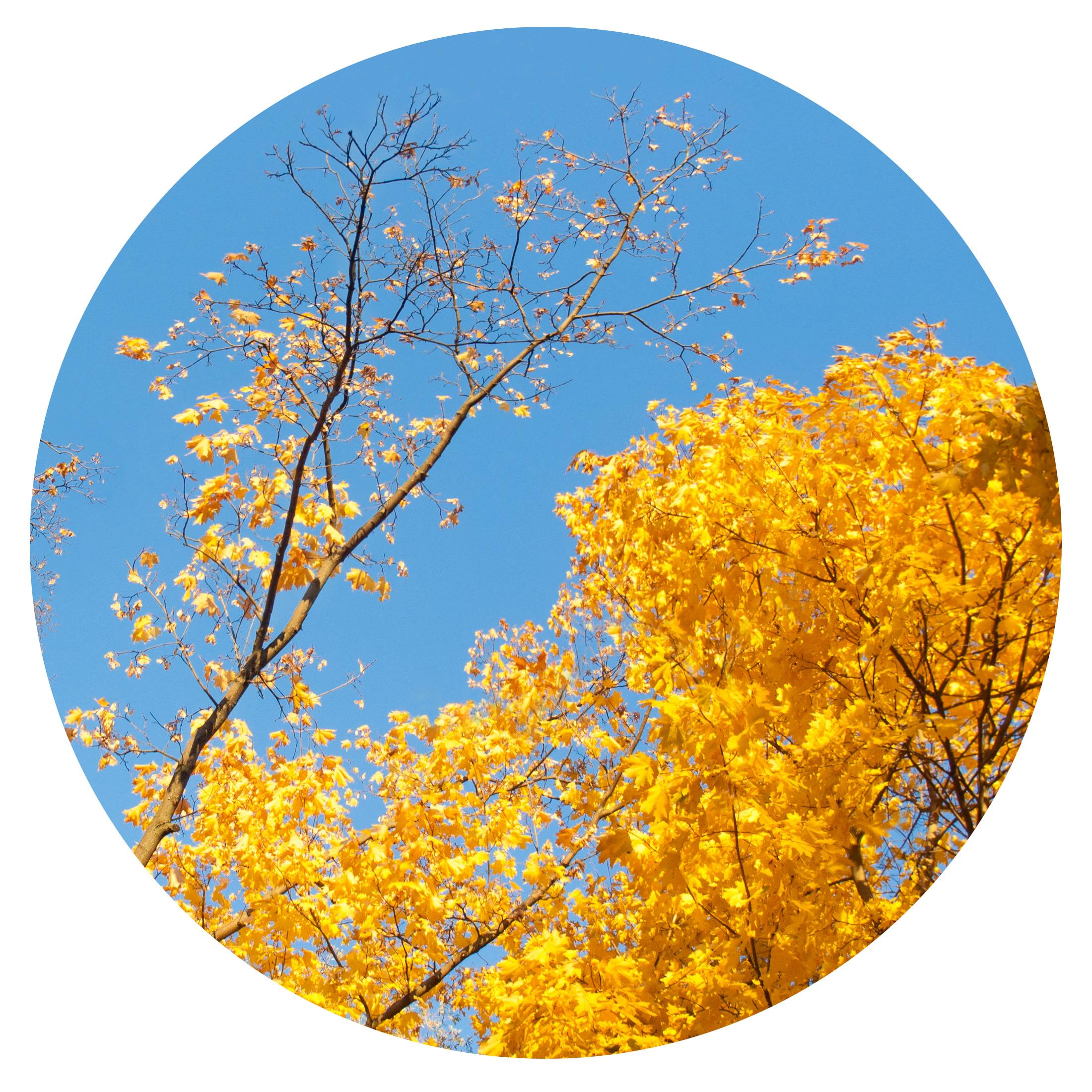 Осенний инь-ян / Autumn Yin Yang